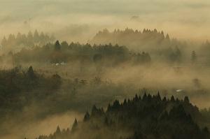 霧の夜久野高原②